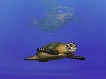 Turtle Undersea  Stock Photography