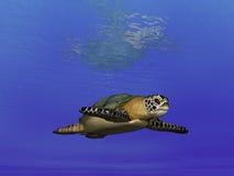 Turtle Undersea. Rendering of an undersea turtle Stock Photography