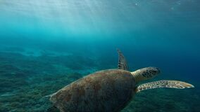 Turtle underwater Royalty Free Stock Photos