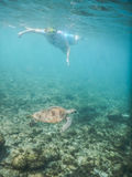 Turtle Underwater and snorkeller Stock Photography