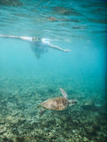 Turtle Underwater and snorkeller Royalty Free Stock Photos