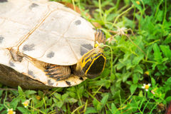 Turtle upside down Stock Image