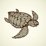 Turtle. Vector drawing Royalty Free Stock Images