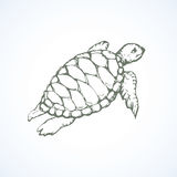 Turtle. Vector drawing Stock Photo