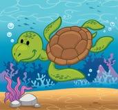 Turtle. Vector illustration of Cartoon turtle Royalty Free Stock Photos