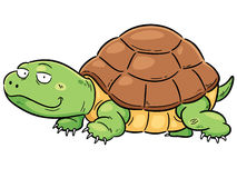Turtle. Vector illustration of Cartoon turtle Royalty Free Stock Images