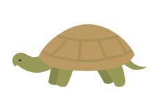 Turtle Vector Illustration in Flat Design Stock Photo