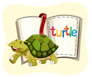 Turtle walking and a book Stock Image