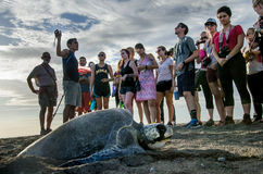 Turtle watching - tourist group Royalty Free Stock Photography
