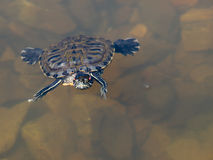Turtle and water stock photos
