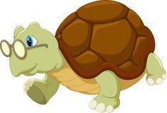 Turtle wearing glasses Stock Photo