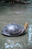 Turtle on Wet Floor Stock Photo