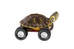Turtle on wheels Royalty Free Stock Photo