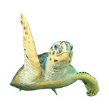 Turtle on white Stock Photo