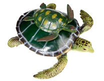 Turtle with your son Royalty Free Stock Image