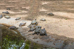 Turtle in zoo. Many turtle in zoo royalty free stock photography