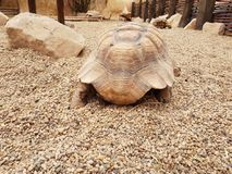 Turtle in zoo. On yelow background stock image
