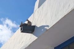 2 turtledoves, Белый Дом, голубое небо Стоковое Изображение