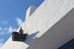 2 turtledoves, Белый Дом, голубое небо Стоковые Фотографии RF