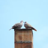 Turtledoves on chimney Royalty Free Stock Images