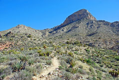 Turtlehead Peak in Red Rock Canyon, Las Vegas, Nevada. The image shows a hiking trail leading up to one of the more popular hikes, Turtlehead Peak (upper right) stock photography