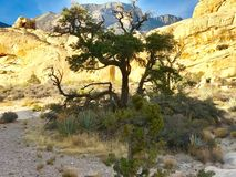 Red Rock Conservation Area, Nevada Royalty Free Stock Photo