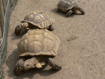 Turtles Stock Photos