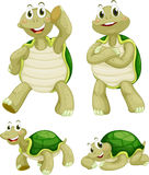 Turtles. Illustraiton of comical turtles on white Royalty Free Stock Image