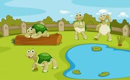 Free Turtles Stock Image - 33098661