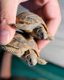 Turtles Stock Photo