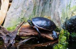 Turtles in an aquarium setting Stock Photos