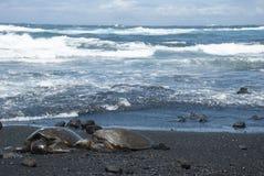 Turtles on black sand beach. Green Sea Turtles resting ashore on a black sand beach. Taken on the big island, Hawaii, United States Stock Photography