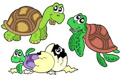 Turtles collection Stock Images