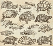 Turtles - collection of hand drawings, freehand sketches on old. Animals around the World - TURTLES and Tortoises. Collection of an hand drawn illustrations Stock Photo