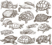 Turtles - collection of hand drawings, freehand sketches on whit. Animals around the World - TURTLES and Tortoises. Collection of an hand drawn illustrations Royalty Free Stock Photography