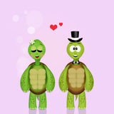 Turtles couple Royalty Free Stock Image