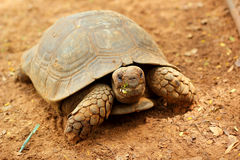 Turtles crawling in the nature Stock Photo