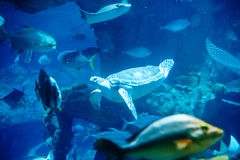 Turtles and deep-sea fish Royalty Free Stock Photography
