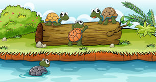 Turtles on a dry wood. Illustration of turtles on a dry wood in a beautiful nature Stock Image