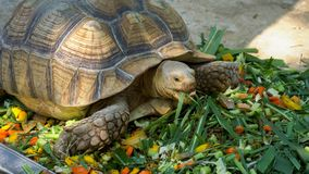 Turtles are eating food stock photography