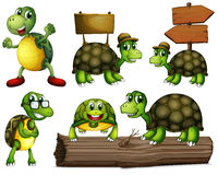 Turtles with empty signboards Stock Image