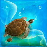 Turtles family. Swimming in the ocean Royalty Free Stock Image