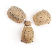 Turtles family Stock Photo