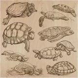 Turtles - An hand drawn vector collection. Tortoise. Set of hand. Animals around the World - TURTLES and Tortoises. Collection of an hand drawn vector Stock Photos