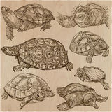 Turtles - An hand drawn vector collection. Tortoise. Set of hand. Animals around the World - TURTLES and Tortoises. Collection of an hand drawn vector Royalty Free Stock Photo