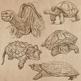 Turtles - An hand drawn vector pack Royalty Free Stock Images