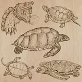 Turtles - An hand drawn vector pack Stock Photos