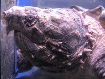 Turtles Head Detail Stock Photo
