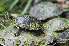 Turtles inside the train stadion in Madrid Royalty Free Stock Image