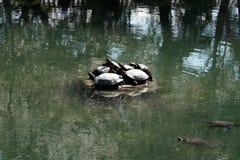 Turtles island Stock Photos